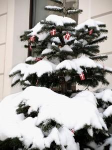 Verschneite Winterimpression unseres geschmückten Weihnachtsbaumes.